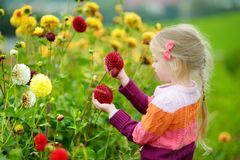 Cute little girl playing in blossoming dahlia field. Child picking fresh flowers in dahlia meadow on sunny summer day Royalty Free Stock Photos