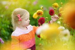 Cute little girl playing in blossoming dahlia field. Child picking fresh flowers in dahlia meadow on sunny summer day Stock Photo