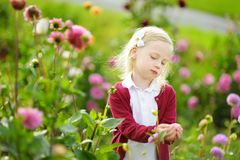 Cute little girl playing in blossoming dahlia field. Child picking fresh flowers in dahlia meadow on sunny summer day. Kid choosing flowers for her mother stock images