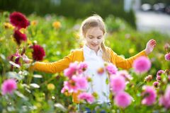 Cute little girl playing in blossoming dahlia field. Child picking fresh flowers in dahlia meadow on sunny summer day. Kid choosing flowers for her mother stock photo