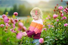 Cute little girl playing in blossoming dahlia field. Child picking fresh flowers in dahlia meadow on sunny summer day Royalty Free Stock Image