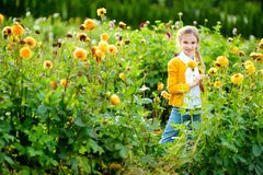 Cute little girl playing in blossoming dahlia field. Child picking fresh flowers in dahlia meadow on sunny summer day. Royalty Free Stock Photography