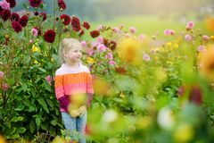 Cute little girl playing in blossoming dahlia field. Child picking fresh flowers in dahlia meadow on sunny summer day Stock Photography