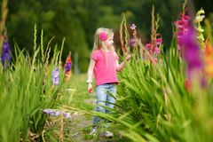 Cute little girl playing in blossoming gladiolus field. Child picking fresh flowers in sword lily meadow on sunny summer day. Kid choosing flowers for her royalty free stock photos