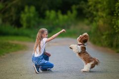 Cute little girl is playing and training a little dog in the summer in the park stock images