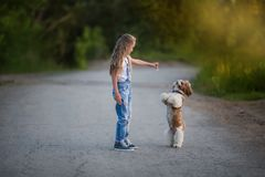 Cute little girl is playing and training a little dog in the summer stock photos