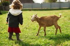 Cute little girl plays with goat Stock Image