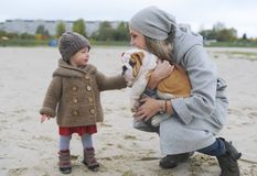 Cute little girl plays with a puppy of a buldog on the river bank in autumn Royalty Free Stock Images