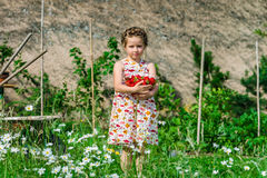 Cute little girl posing with fresh red strawberry in the sunny g Stock Image