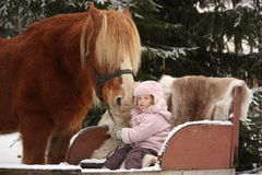 Cute little girl sitting in the sledges and big palomino draught Stock Images