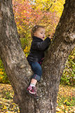 Cute little girl sitting in a tree in autumn. Royalty Free Stock Images
