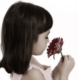 Cute  little girl smelling flower. isolated Stock Images