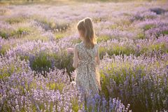 Cute little girl in summer dress stands among flowering lavender field royalty free stock images