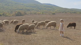 Cute little girl trying to feed the sheep in a