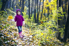 Cute little girl walking in autumn forest Royalty Free Stock Images
