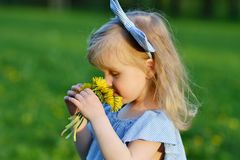 Cute little girl walking in the park with dandelion flowers. Smelling, mother`s day concept Royalty Free Stock Images