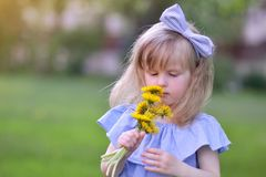 Cute little girl walking in the park with dandelion flowers. Smelling, mother`s day concept Royalty Free Stock Photo