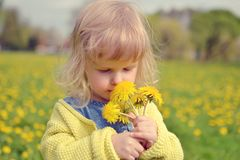 Little girl walking in the park, springtime. Cute little girl walking in the park with dandelion flowers, spring time, sunny day Royalty Free Stock Image