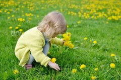 Little girl walking in the park, springtime. Cute little girl walking in the park with dandelion flowers, spring time, sunny day Stock Image