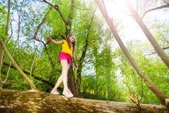 Cute little girl walking on trunk of fallen tree. Bottom view portrait of little girl walking and balancing on trunk of fallen tree in the forest royalty free stock photo