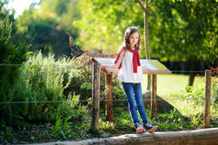 Cute little girl watching animals in the zoo on warm and sunny summer day Stock Photos