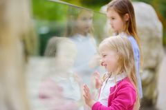 Cute little girl watching animals at the zoo on warm and sunny summer day. Child watching zoo animals through the window. Royalty Free Stock Photography