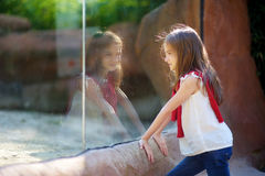 Cute little girl watching animals in the zoo on warm and sunny summer day Stock Images