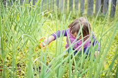 Cute little girl watering garden Royalty Free Stock Images