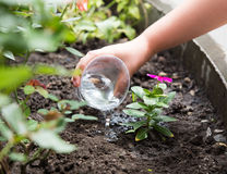 Cute little girl watering plants in the garden Royalty Free Stock Image