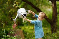 Cute little girl watering plants in the garden at summer sunny day. Mommy little helper royalty free stock photo