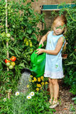 Cute little girl watering tomato and flowers in the backyard Stock Photos