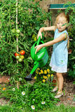 Cute little girl watering tomato and flowers in the backyard Stock Images