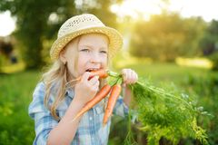 Cute little girl wearing straw hat holding a bunch of fresh organic carrots. Fresh healthy organic food for small kids. royalty free stock photos