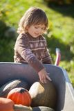 Toddler girl harvesting orange pumpkins at the wheelbarrow. Cute little girl working at family farm, countryside. Little gardener in the garden, autumn harvest Stock Photography