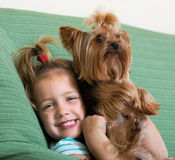 Cute little girl with yorkshire terrier indoor Stock Images