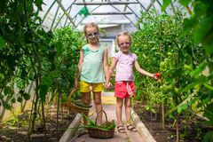 Cute little girls collect crop cucumbers in the Royalty Free Stock Photos