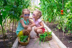 Cute little girls collect crop cucumbers in the Stock Photography