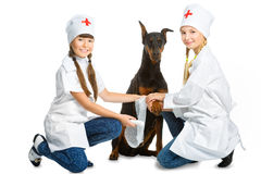 Cute little girls dressed like doctor treated dog Royalty Free Stock Photography