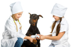 Cute little girls dressed like doctor treated dog Stock Photography