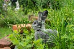 Cute, little, gray rabbit Royalty Free Stock Image
