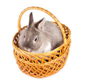 Cute little bunny in a basket Stock Images