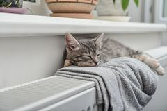 Cute little grey kitten Royalty Free Stock Images