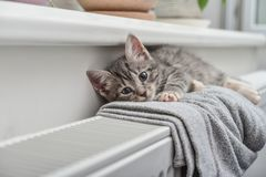 Cute little grey kitten. With blue eyes relaxing on the warm radiator closeup Stock Photography