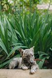 Cute little grey puppy with collar sitting in grass and biting l. Eashes. sweet doggy playing outdoors. homeless dog looking for home. adoption concept stock photo