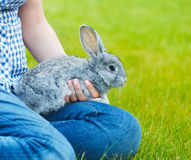 Cute little grey rabbit in the hands of a woamn on green grass b Stock Photography