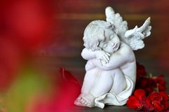 Little guardian angel sleeping Stock Image