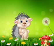 Cute little hedgehog on grass background Royalty Free Stock Images