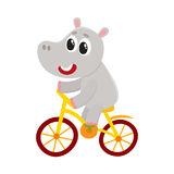 Cute little hippo character riding bicycle, cycling, holding handlebar. Cute little hippo character riding bicycle, cycling, cartoon vector illustration isolated Stock Images