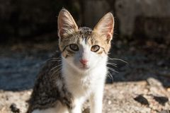 Cute little homeless kitten on the street. Сolored stray kitten looking plaintively into the camera Royalty Free Stock Photos