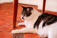 Cute little house cat relaxes and enjoying of your room Royalty Free Stock Photography